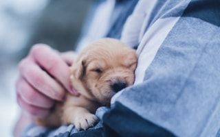 malé štěně vnáručí usíná