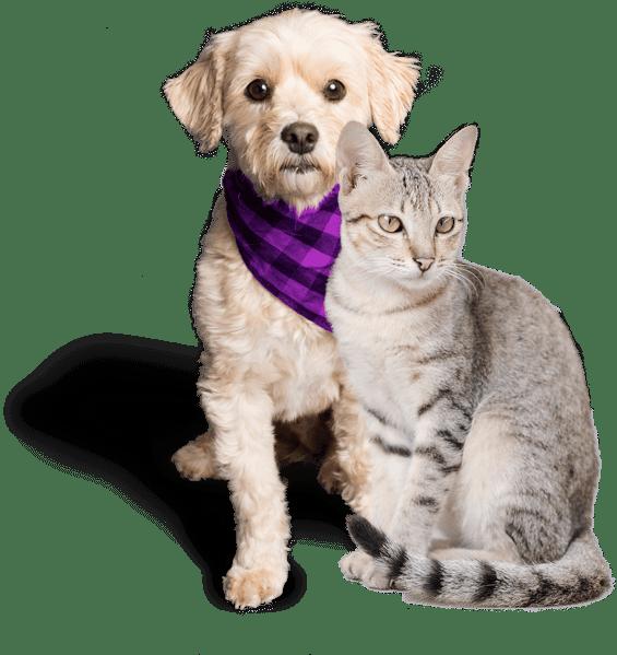 Premiumvet - pes akočka